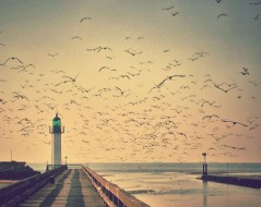 lighthouse with seagulls flying above