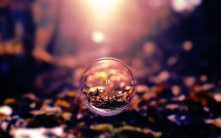 small plant in a bubble