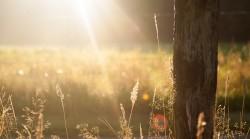sunshine on grass and tree