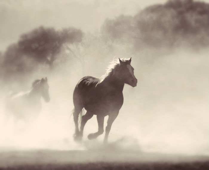 horse coming through a bank of fog