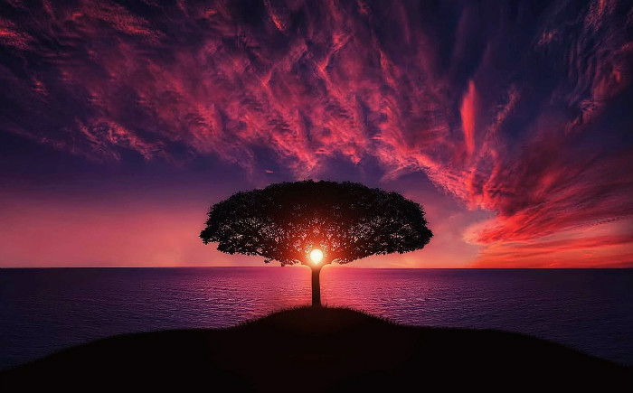 sunset through lone tree